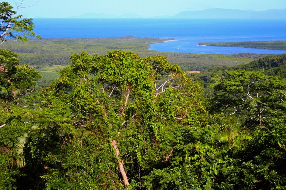 Daintree Rainforest by stephmcg (creative commons)