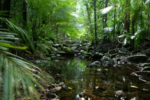 Daintree Rainforest (creative commons)