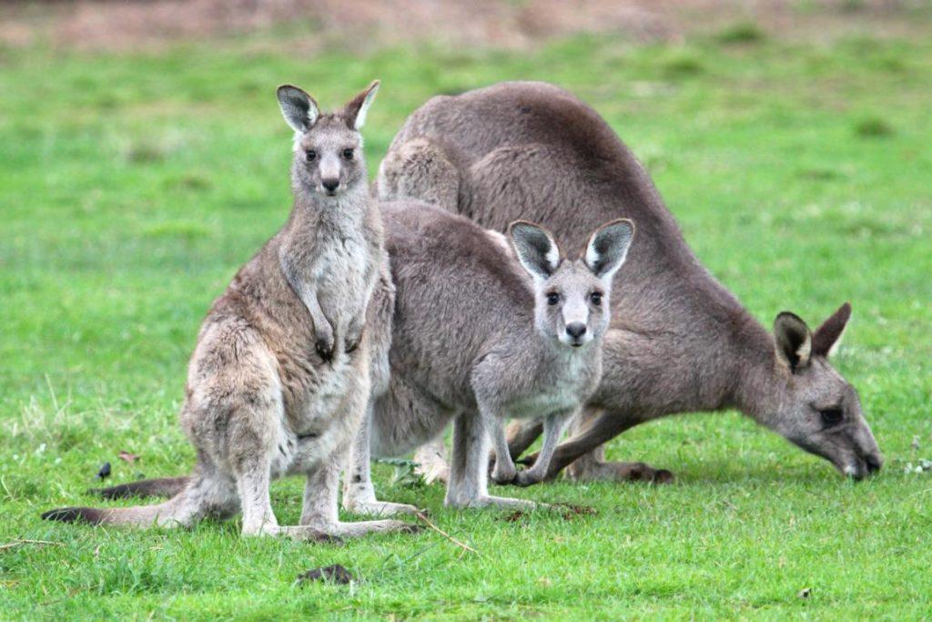 6 Australian Adventures For Animal Lovers